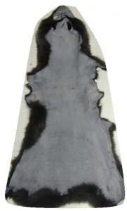 fox-rawskin-30-pelt